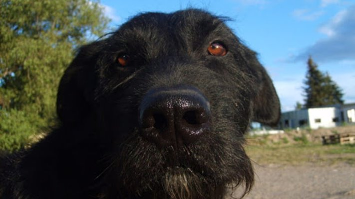 Perros Irlandeses y Perros en la Plaza Irlanda